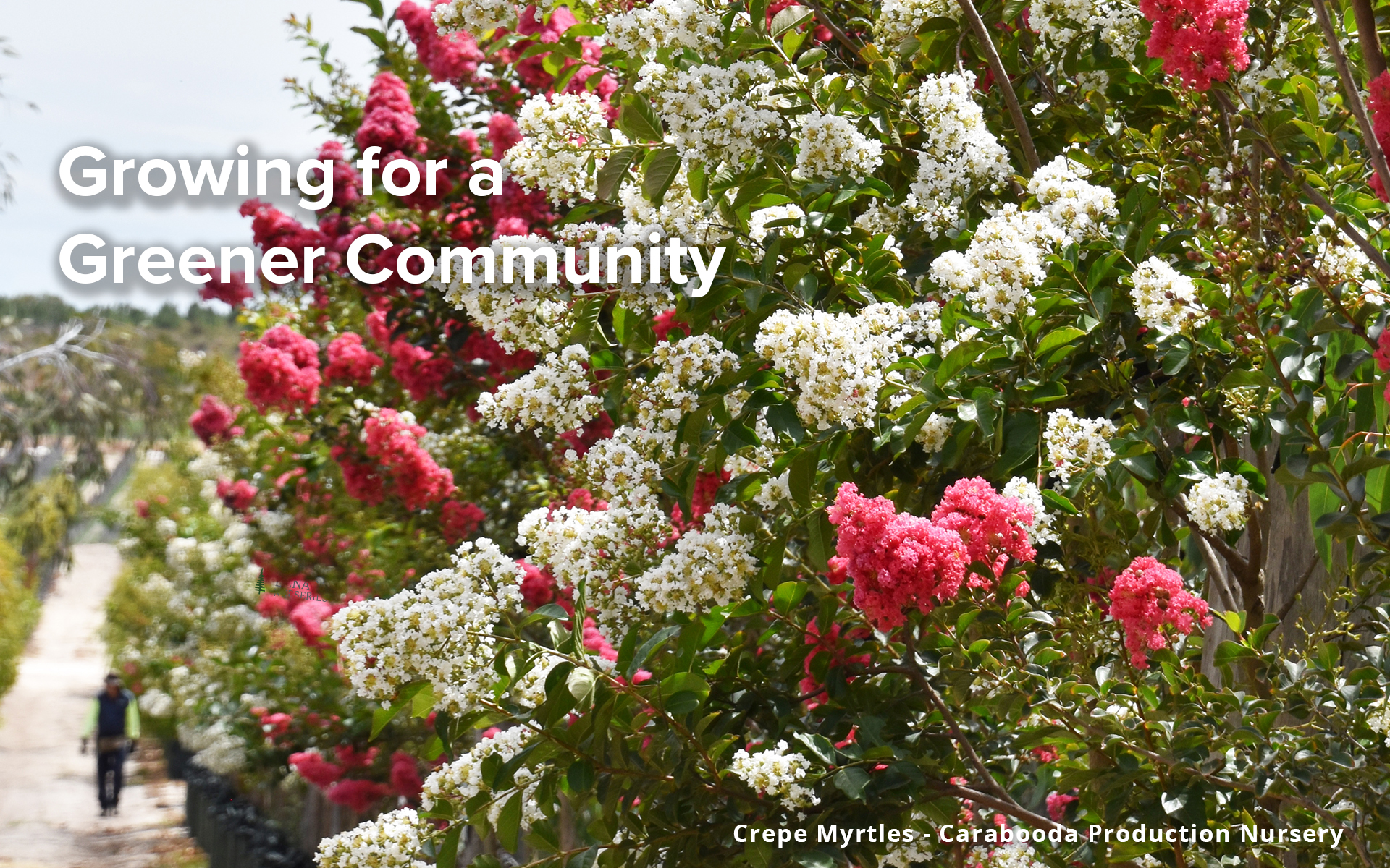 Growing For A Greener Community
