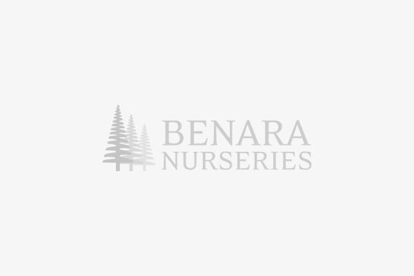 Bowl Planter BAULO, White Terrazzo
