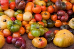 Tomato Heirloom Rainbow Tray