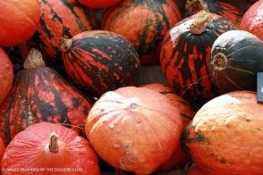 Pumpkin Lakota Diggers Tray