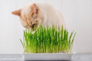 Pet Grass Tray